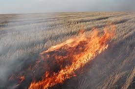 трава горит, пожар