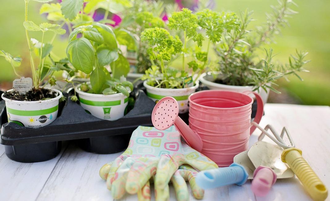 сад, дача, рассада, садовые инструменты